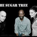 The Sugar Tree
